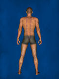 Acupuncture, 3D Model Royalty Free Stock Images