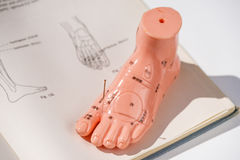 Acupuncture demonstration on foot model. With needles Royalty Free Stock Images