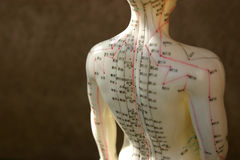 Acupuncture dummy back and shoulders Royalty Free Stock Images