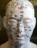 Acupuncture Facial Points. Model of human head depicting acupuncture points Royalty Free Stock Photos