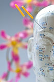 Acupuncture head model Royalty Free Stock Photography