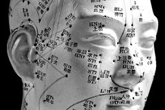 Acupuncture head model Stock Images