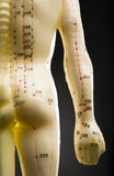 Acupuncture mannequin -- back and arm Royalty Free Stock Photography