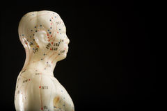 Acupuncture mannequin profile Stock Photography