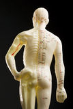 Acupuncture mannequin -- rear view Stock Photography