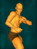 Acupuncture model, 3D illustration royalty free stock photo