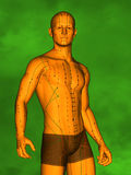 Acupuncture model, 3D Model Stock Photography