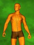 Acupuncture model, 3D Model Stock Photos