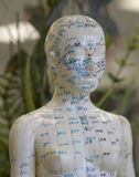 Acupuncture Model-Female. Female model of acupuncture points on the human body Royalty Free Stock Photo