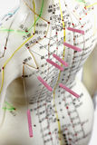 Acupuncture model. Female acupuncture model with needles in the shoulder Stock Photos