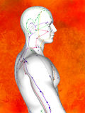 Acupuncture model Royalty Free Stock Photography