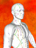 Acupuncture model Royalty Free Stock Photos