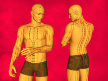 Acupuncture model. Human Body, Acupuncture Model, Acupuncture Points and Meridians, 3D Model, 3D Illustration, Red Background Royalty Free Stock Photo