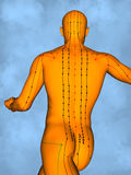 Acupuncture model M-POSE M4ay-24-13, 3D Model. Human Poses, Meridians and Acupoints,  Human Body,   Acupuncture Background Royalty Free Stock Photos