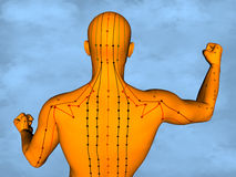 Acupuncture model M-POSE M4ay-24-8, 3D Model. Human Poses, Meridians and Acupoints,  Human Body,   Acupuncture Background Stock Photography