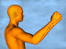 Acupuncture model M-POSE M4ay-24-2, 3D Model. Human Poses, Meridians and Acupoints,  Human Body,   Acupuncture Background Stock Photography