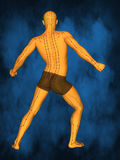 Acupuncture model M-POSE M4ay-06-12, 3D Model. Human Poses, Meridians and Acupoints,  Human Body,   Acupuncture Background Stock Image