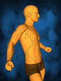 Acupuncture model M-POSE M4ay-06-3, 3D Model. Human Poses, Meridians and Acupoints,  Human Body,   Acupuncture Background Royalty Free Stock Photos