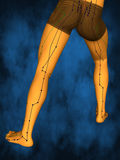 Acupuncture model M-POSE M4ay-06-6, 3D Model. Human Poses, Meridians and Acupoints,  Human Body,   Acupuncture Background Stock Photos