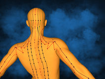 Acupuncture model M-POSE M4ay-06-2, 3D Model. Human Poses, Meridians and Acupoints,  Human Body,   Acupuncture Background Royalty Free Stock Image