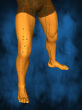 Acupuncture model M-POSE M4ay-06-8, 3D Model. Human Poses, Meridians and Acupoints,  Human Body,   Acupuncture Background Royalty Free Stock Image