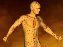 Acupuncture model M-POSE M4ay-06-4, 3D Model Stock Photos