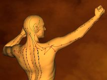 Acupuncture model M-POSE M4ay-10-1, 3D Model Stock Photos