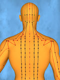 Acupuncture model M-POSE Mylie-01-8, 3D Model. Human Poses, Meridians and Acupoints,  Human Body,   Acupuncture Background Royalty Free Stock Image