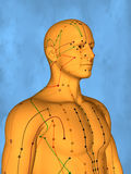 Acupuncture model M-POSE Mylie-01-10, 3D Model. Human Poses, Meridians and Acupoints,  Human Body,   Acupuncture Background Royalty Free Stock Image