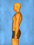 Acupuncture model M-POSE Mylie-01-4, 3D Model. Human Poses, Meridians and Acupoints,  Human Body,   Acupuncture Background Stock Image