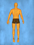 Acupuncture model M-POSE Mylie-01-1, 3D Model Stock Photo