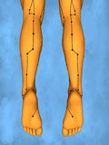 Acupuncture model M-POSE Mylie-01-7, 3D Model Stock Photos