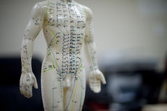 Acupuncture. Model view from the front Royalty Free Stock Images