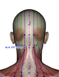 Acupuncture point BL10 Tianzhu Royalty Free Stock Photography