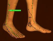 Acupuncture Point GB37 Guangming, 3D Illustration, Brown Backgro stock photography