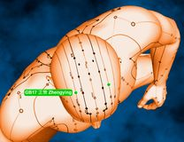 Acupuncture Point GB17 Zhengying, 3D Illustration, Blue Backgrou stock images