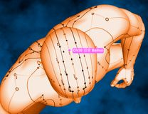 Acupuncture Point GV20 Baihui, 3D Illustration, Blue Background Royalty Free Stock Photo