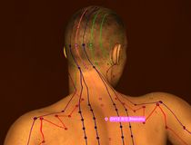 Acupuncture Point GV12 Shenzhu, 3D Illustration, Brown Backgroun stock photography