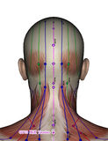 Acupuncture point GV13 Taodao Royalty Free Stock Image