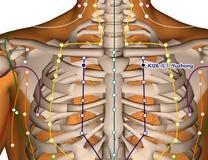 Acupuncture Point KI26 Yuzhong, 3D Illustration Royalty Free Stock Photo