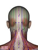 Acupuncture point SI14 Jianwaishu Royalty Free Stock Images