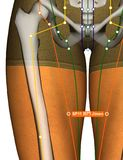 Acupuncture Point SP11 Jimen, 3D Illustration Stock Photography