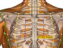 Acupuncture Point ST17 Ruzhong, Stomach Meridian royalty free stock images