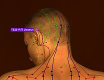Acupuncture Point TE20 Jiaosun, 3D Illustration, Brown Backgroun royalty free stock photo