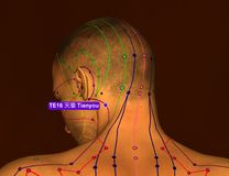 Acupuncture Point TE16 Tianyou, 3D Illustration, Brown Backgroun stock photography