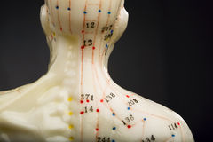 Acupuncturists doll neck Stock Photo