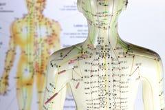 Acupunctuur model#02 Royalty-vrije Stock Foto