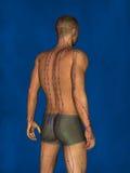 Acupuntura, modelo 3D Fotografia de Stock Royalty Free