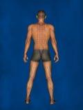 Acupuntura, modelo 3D Imagens de Stock Royalty Free
