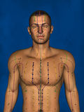 Acupuntura, modelo 3D Fotos de Stock Royalty Free